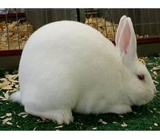 Best About bunnies