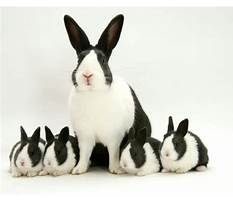 Best About rabbits and bunnies