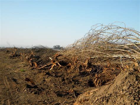 Abundant-Table-Farm-Project
