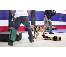 Best Aggressive dog training dfw