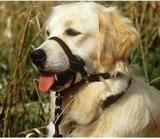Best Aggressive dog training instructions.aspx