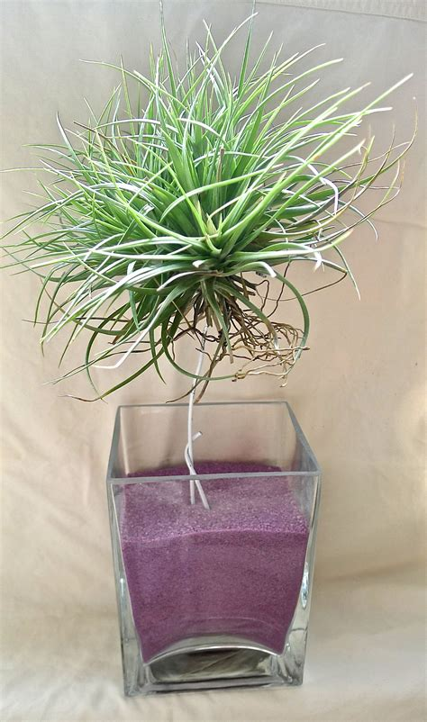 Air-Plant-Containers-Easy-Diy-Wood