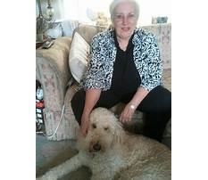 Best Alameda dog training classes.aspx