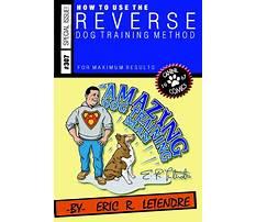 Best Amazing dog training.aspx