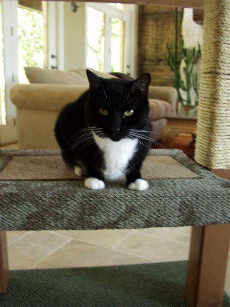 Ana-White-Cat
