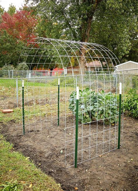Anchoring Bean Trellis DIY
