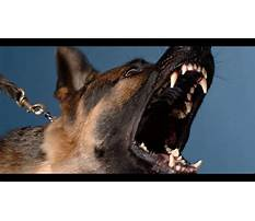 Best Angry dog bark growl sound effects high quality