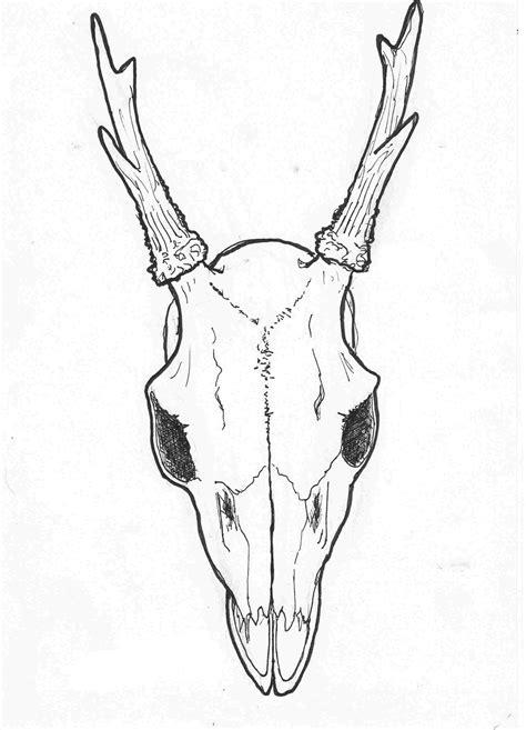 Animal Skull Drawings Easy