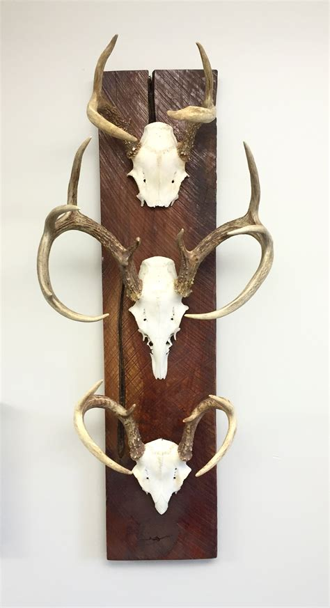 Antlers On Barn Wood Diy Picture