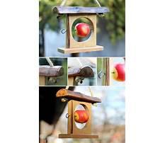 Best Apple bird feeders craft