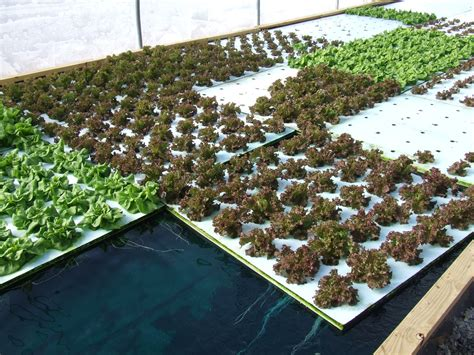 Aquaponic Deep Water Culture Diy Trays