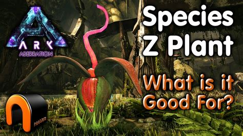 Ark Plant Z Seed