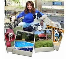 Best Atlanta dog training and pet resort cumming ga