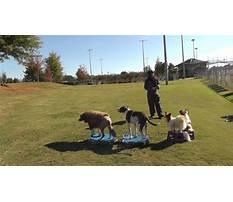Best Atlanta dog training