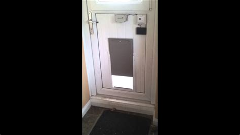 Automatic Dog Door Diy