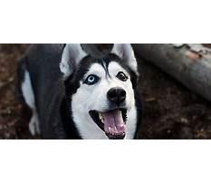 Best Awesome dawgs dog training llc.aspx