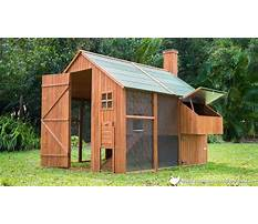 Best Backyard chicken coop design