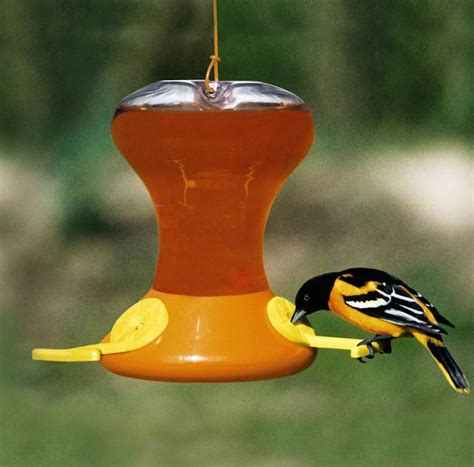 Baltimore-Oriole-Bird-Feeder-Plans