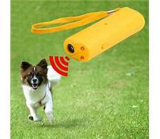 Best Bark training