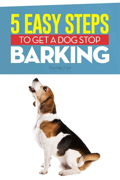 Barking dogs how to stop Image