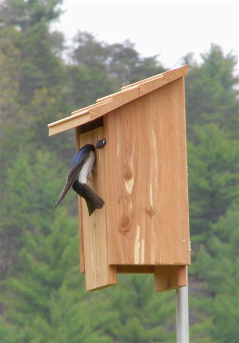 Barn Swallow Nesting Box Plans