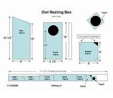 Best Barn owl house plans.aspx
