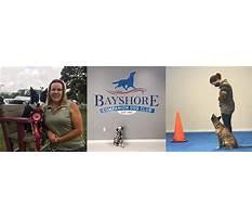 Best Bayshore companion dog training club