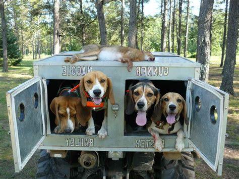 Beagle-Dog-Box-Plans