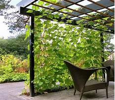 Best Beautiful vines for garden