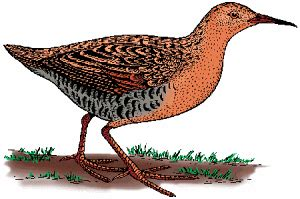 Bed Rail Defined By Merriam Webster
