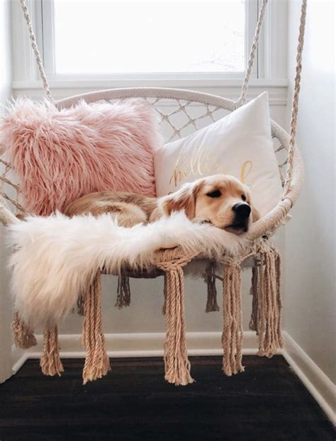 Bedside Dog Bed Diy Ideas