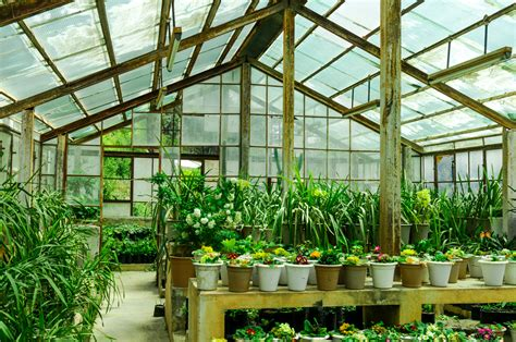Best Greenhouse Plants To Grow
