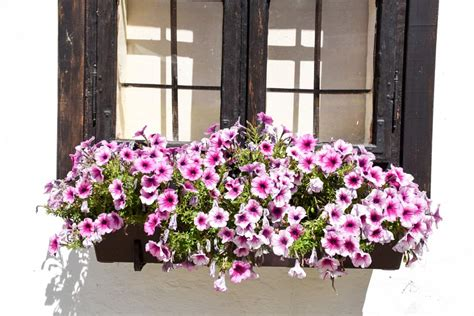 Best Plants For Window Boxes In Zone 5