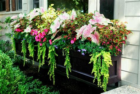 Best Window Box Plants For Full Sun Areas Of The Brain