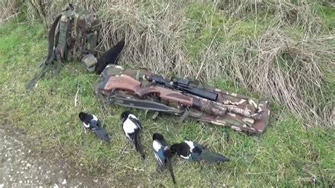 Best Air Rifle For Hunting Magpies And Best Ammo For My Rifle 556