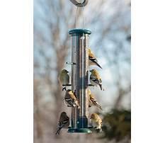 Best Best bird feeders for finches amazon