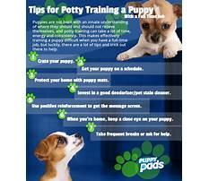 Best Best way to potty train dog.aspx