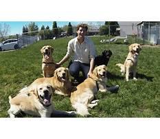 Best Bff dog training md.aspx