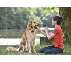 Best Bipolar service dog training.aspx