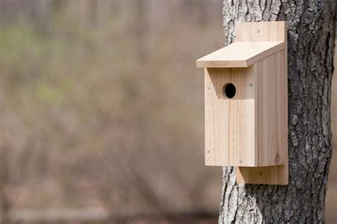 Bird-House-Plans-Images