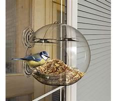 Best Bird feeder window.aspx