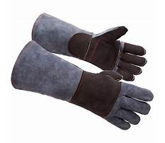Best Bite training