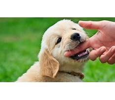 Best Biting in puppies
