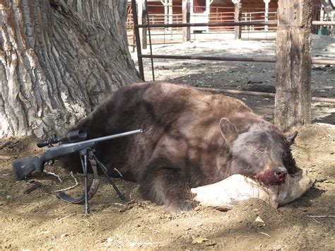 Black Bear Killed With Handgun And Bore Snake Vs Rod To Clean Handgun