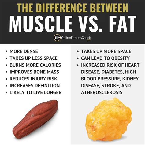 Body Fat Vs Muscle