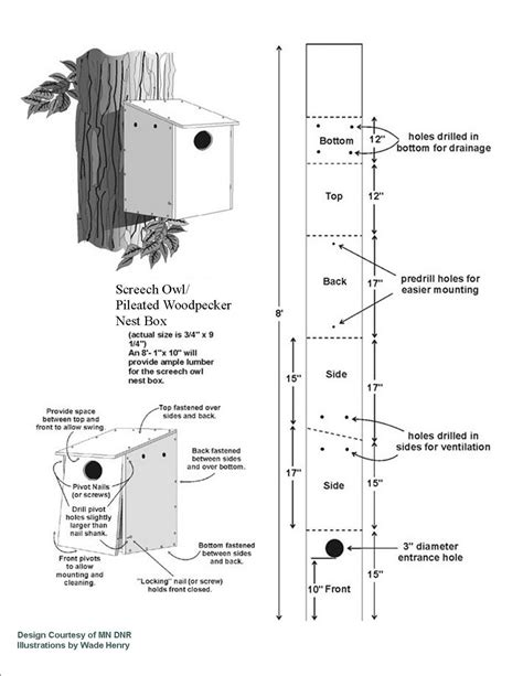 Box Plans For Pileated Woodpecker