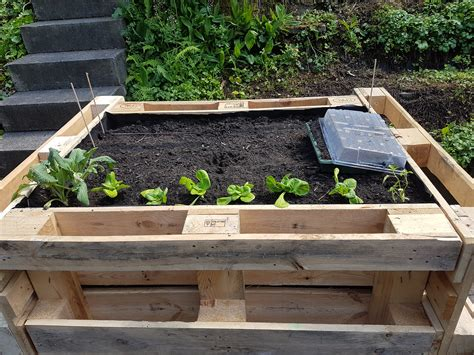 Build Raised Garden Bed With Pallets