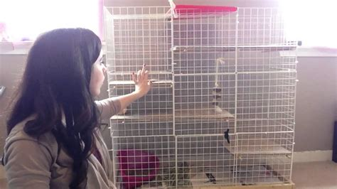 Build Your Own Rabbit Cages Videos