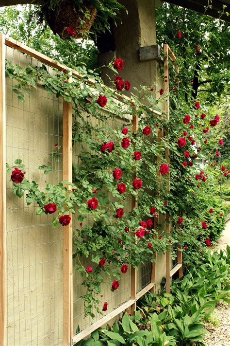 Build-A-Trellis-For-Roses