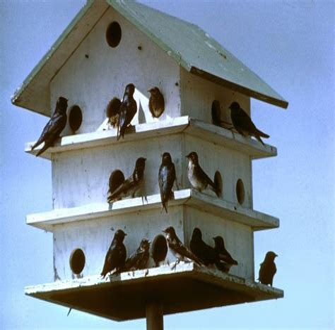 Build-Martin-House-Plans